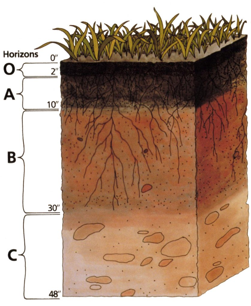 A diagram of a soil pedon depicting O, A, B, and C horizons.