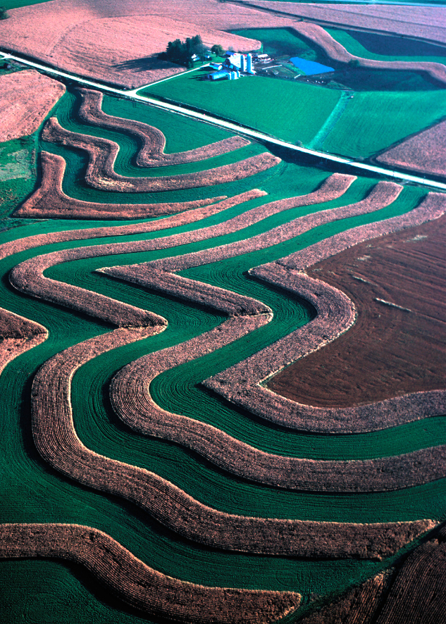 An image from an airplane showing a farm using strip cropping with alternating strips of tan-colored corn ready for harvest and green-colored alfalfa.