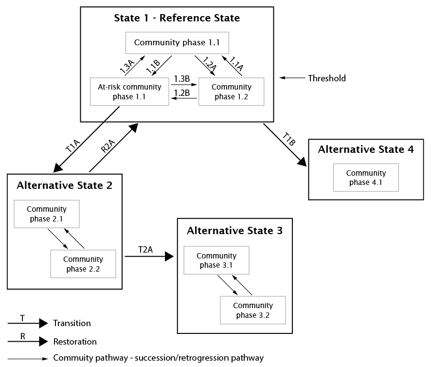 An example of a generic state and transition model
