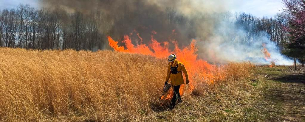 A firefighter setting a prescribed burn with a drip torch.