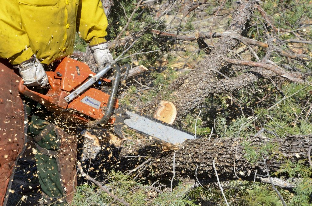 A person cutting trees and branches with a chainsaw.