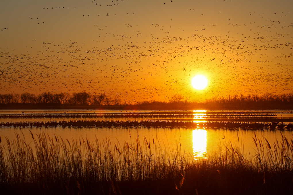 A sunrise over a wetland with waterfowl flying in the sky.