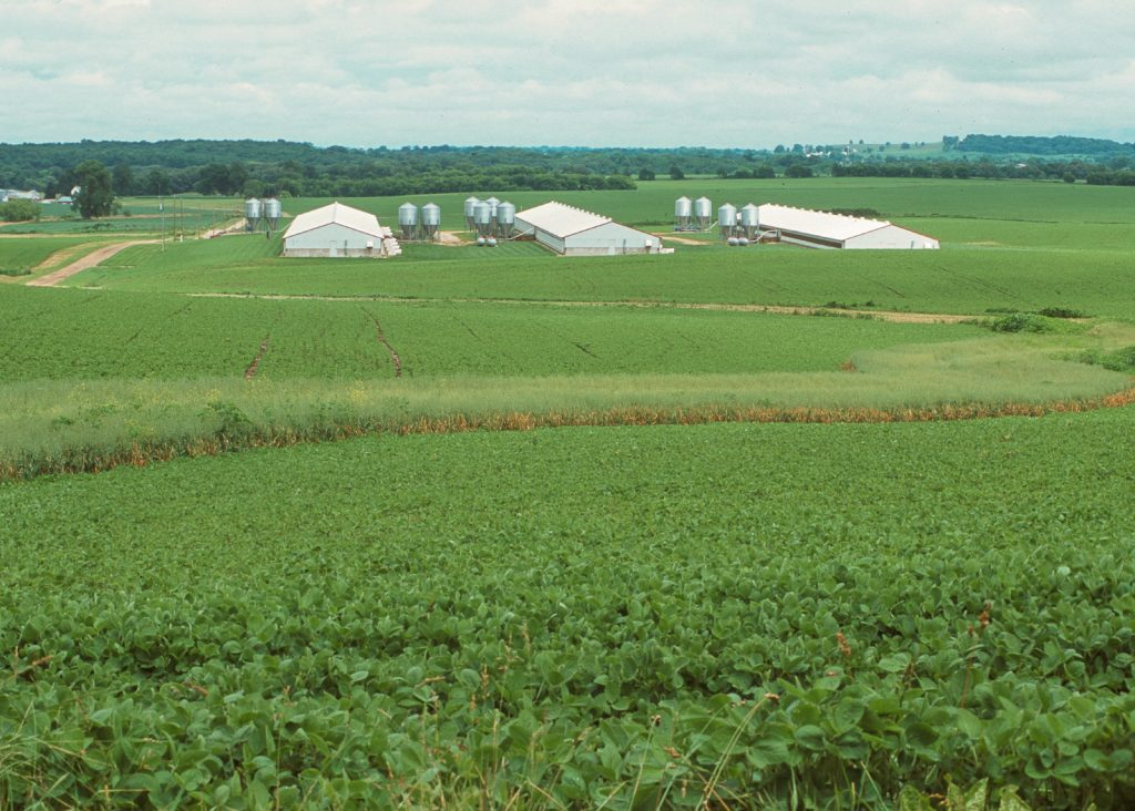 Three hog confinement buildings surrounded by green fields