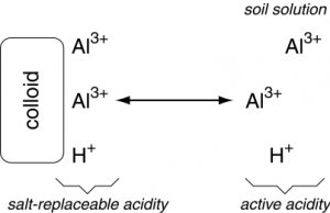 Displacement of base cations