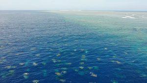 Raine-Island-turtle-aggregation